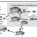 Photo from the Pests and Diseases Image Library: