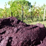Photo by davity dave: http://upload.wikimedia.org/wikipedia/commons/thumb/3/33/Pomace_in_the_vineyard_after_pressing.jpg/800px-Pomace_in_the_vineyard_after_pressing.jpg