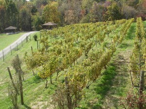 Photo taken at Fox Meadow Winery in Linden, Virginia (copyright RYEAMANS 2011)