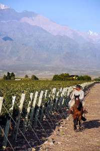 Vineyard in Argentina Photo By Fabio Ingrosso (Flickr: Francois Lurton, vigneti in Argentina) [CC-BY-2.0 (http://creativecommons.org/licenses/by/2.0)], via Wikimedia Commons