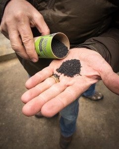 Biochar sample photo from the Oregon Department of Forestry Flickr account (https://www.flickr.com/photos/oregondepartmentofforestry/14536084053)