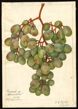 Photo courtesy U.S. Department of Agriculture (Public Domain)